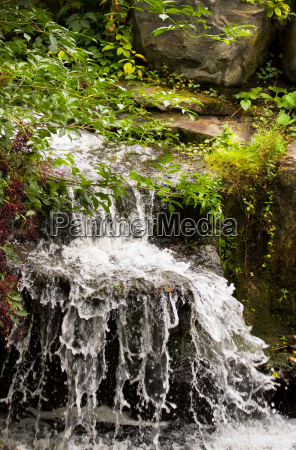 waterfall with plants and bushes