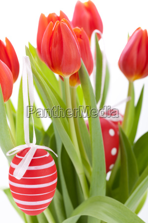 decorative red tulips season flowers decorated