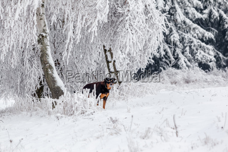 winter hiking path