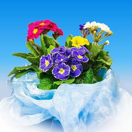 primroses in decorative fabric