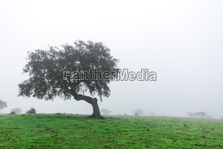wet landscape with lonely tree in
