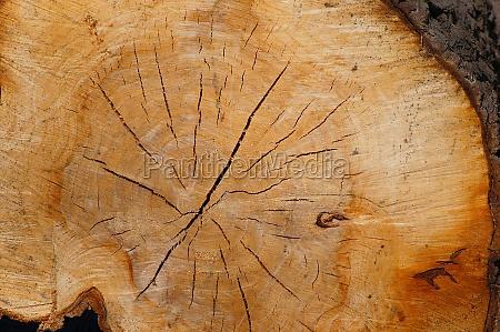 pien drzewa