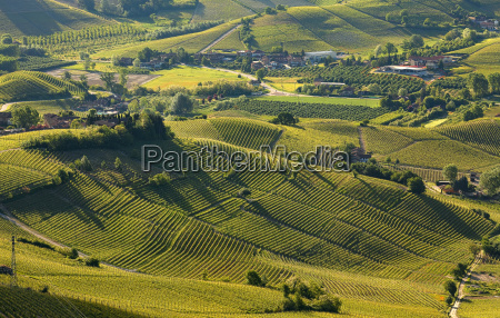 green hills and vineyards of langhe