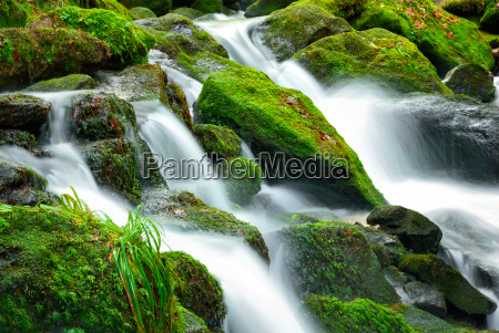 mountain stream with mossy stones