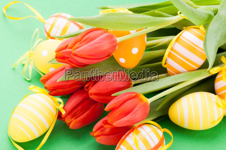 colorful yellow and red tulips with
