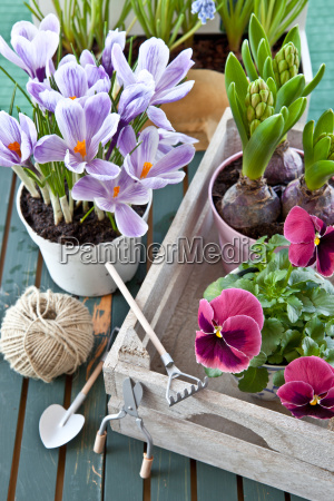 various spring flowers