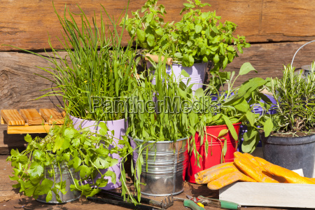 herbs in pots in front of