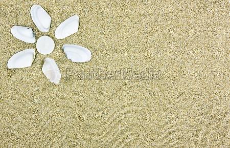 frame with seashells and sand