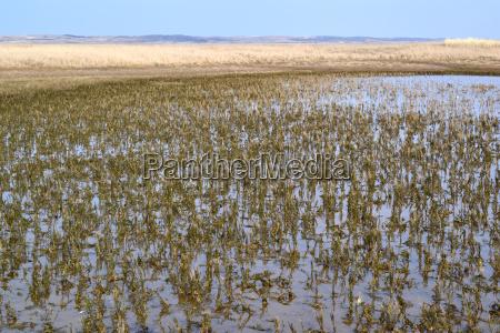 nature reserve de slufter on texel