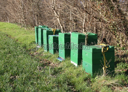 beehives at the deister
