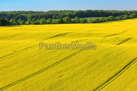 aerial view landscape with rape field