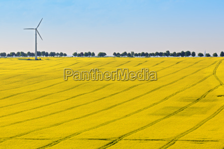 aerial view rape field with wind
