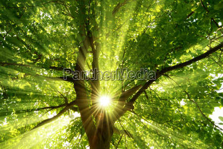 sun shines through the explosive tree