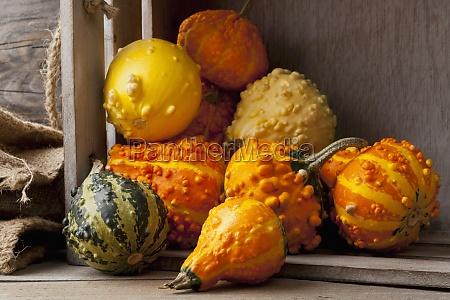 arrangement assorted autumn autumn vegetable autumn