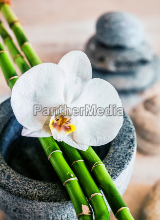 beautiful orchid and bamboo shoots