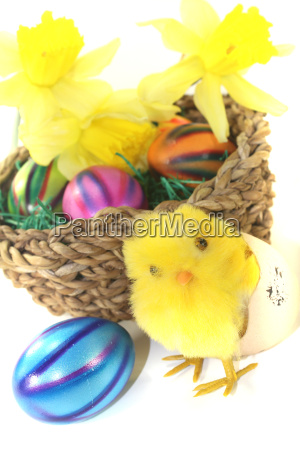 easter nest with chicks and yellow