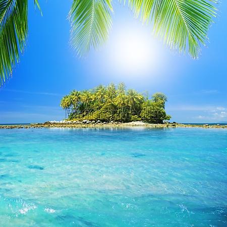 tropical heaven square composition