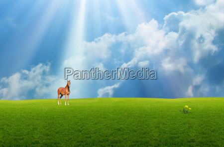 horse in the grassland