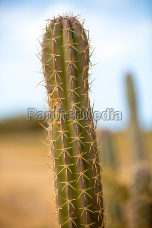 closeup view of a cactus in