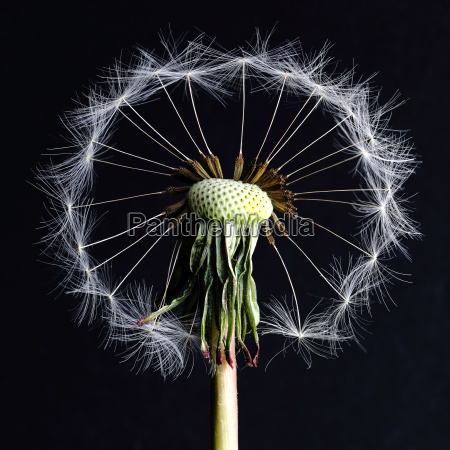 flying seed circle