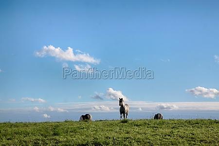 masurian equestrian sky