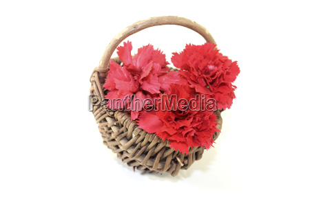 fresh red carnation blossoms in a