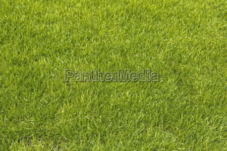 lawn as background