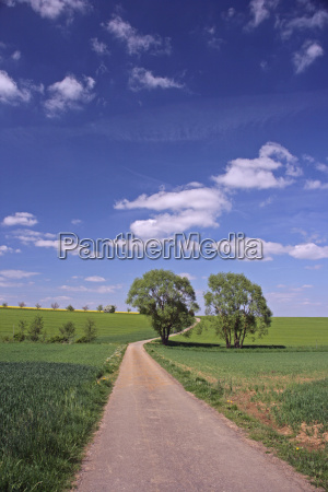 dirt road with 2 deciduous trees