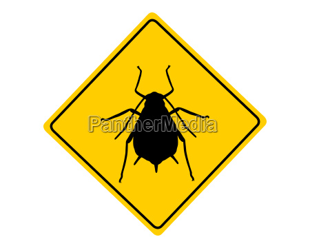 attention aphid