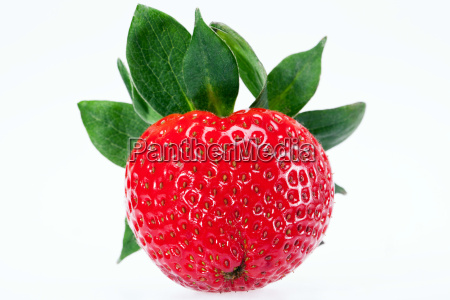 single fruit of red strawberry isolated