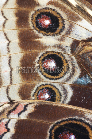 detail of butterfly wings