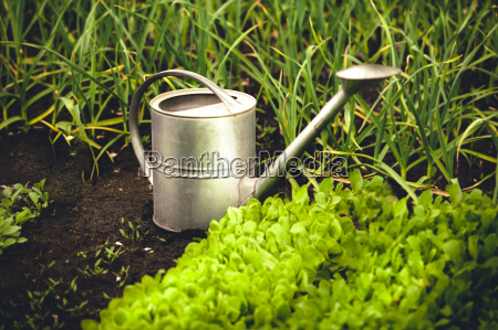 photo of metal watering can on