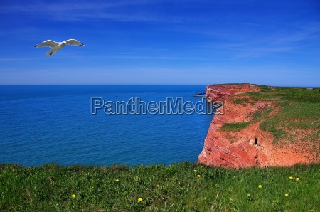 helgoland rocks with seagull