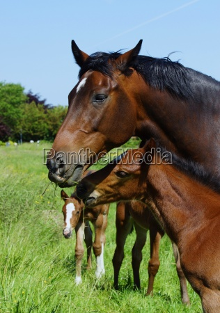 mare with her foal