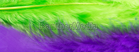 green and purple feather background close