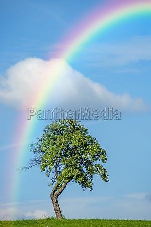 tree with rainbow