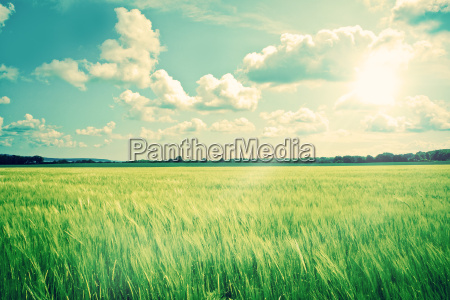 countryside landscape with crops and sunshine
