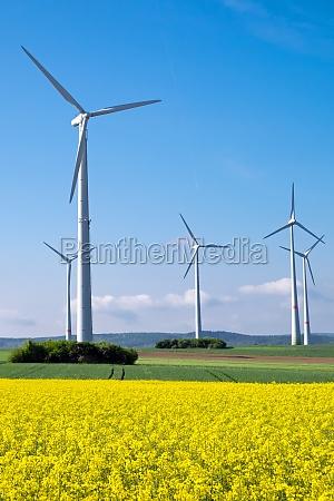 windmills and yellow rape field