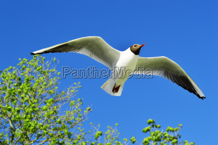 flying seagull over the blue sky
