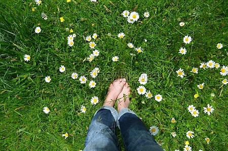 feet in flower meadow
