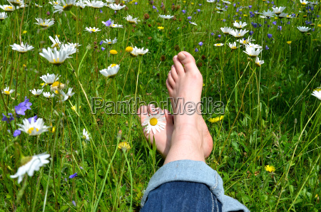 feet in flower meadow