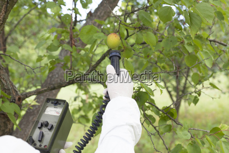 measuring radiation levels of fruits