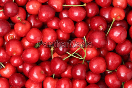 red ripe cherries forming a background