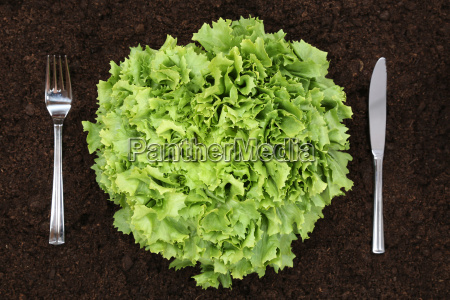 healthy nutrition salad in the vegetable