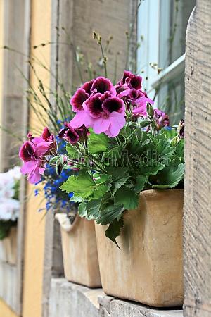 flower on a house window