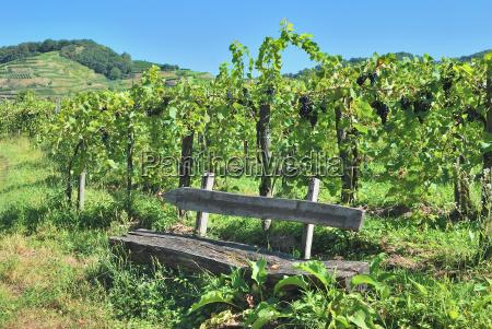 grape arbor in the vineyards of
