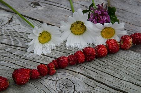 summer symbols wild strawberries and