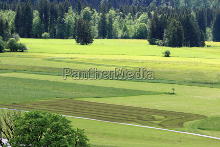 view over the meadows before oberstdorf