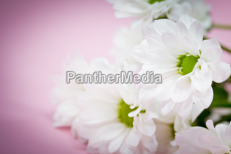 flowers in white and pink