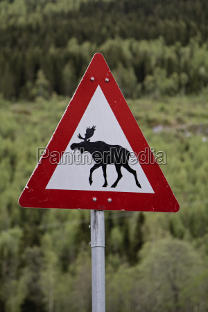 attention moose